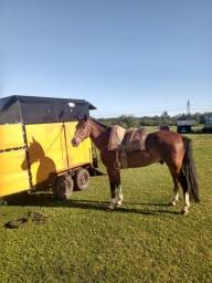 Vendo cavalo douradilho