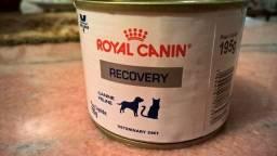 Royal Canin Recovery Canine Feline
