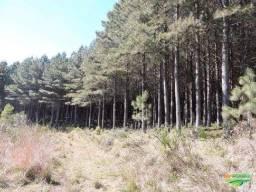 Floresta de Pinus Taeda