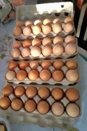 Ovos Caipira Excelente Qualidade