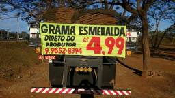 PROMOÇÃO - Grama Esmeralda R$4,50m2.