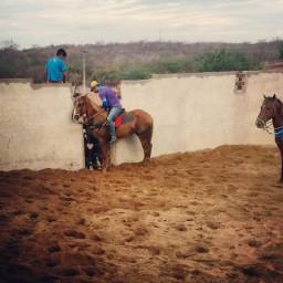 Égua Prenhe de Cavalo PO
