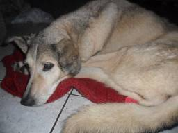 Doa se uma cachorra com necessidades especiais