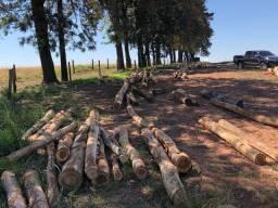 Toras de eucalipto cheiroso