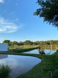 Chácara boa de água   Região Aragoiania   Oportunidade única