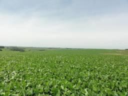 Fazenda de 260 hectares para venda mais 160 de arrendamento no Rio Grande do Sul