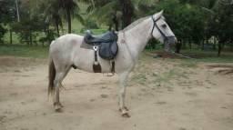 Cavalo macha picada pra calvagada