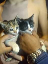 Doação de gatos macho: preto , fêmea: tricolor