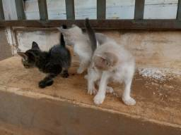 Filhotes de gato abandonados