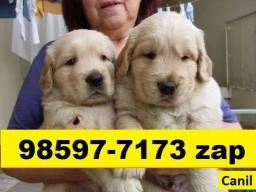 Canil Excelência Filhotes Cães BH Golden Labrador Pastor Akita Dálmatas
