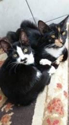 Doação de duas gatas filhotes e bem cuidadas (LEIA A DESCRIÇÃO)