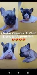 Buldogue francês com pedigree