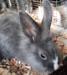 Vendo ou troco filhotes de coelho