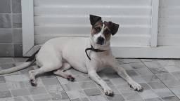 Linda cachorrinha p doação - 10 meses.