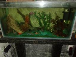 Desapego.aquário