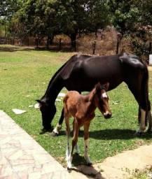 Cavalo (Égua Preta e Potro)