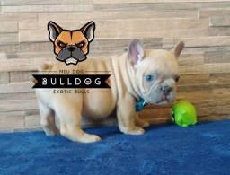 Bulldog francês Macho Lilac Fawn