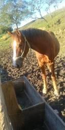 Troco cavalo