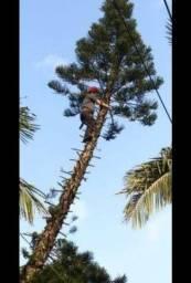 Poda,corte de árvores