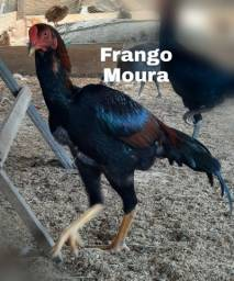 Frango Moura