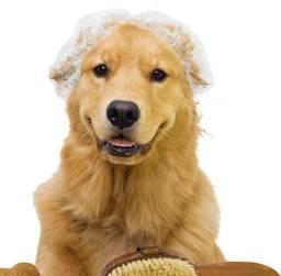 Banho e tosa para pet shop