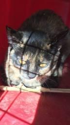 Doação gatinha, urgente