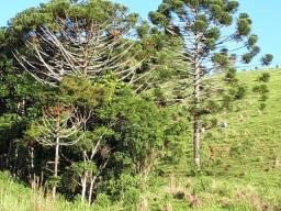 Maravilhoso Sítio de 8,87 hectares em Medanha, Delfim Moreira/MG