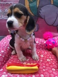 Título do anúncio: Beagle Pronta entrega
