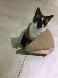 Doação de gatinho castrado