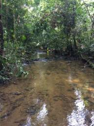 Área de Mato de 400 alqueires em Nova Bandeirante-MT