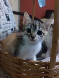 Doação de três lindos gatinhos