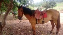 Cavalo comum manso