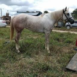 Égua com 6 anos pra vender ou troca em algo de meu interesse