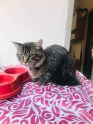 Doação de Gato Dócil