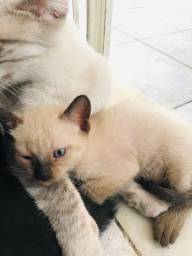 Doação de gatos um mês de vida