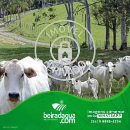 Fazenda 30 Alqueirao Beira Rio da Prata Pecuaria