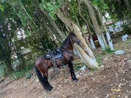 Cavalo castanho top