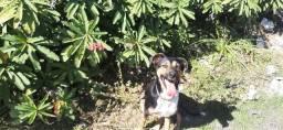 Adestramento de cães / Adestrador