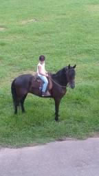 Cavalo Preto Castrado