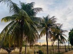 Vendo Terrenos para Chácaras em Juazeiro-BA próximo ao Ceasa