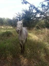 Égua, 4 anos