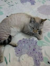 Lindo gatinho para doação