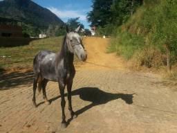 Vendo cavalo top