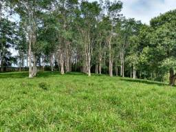Fazenda com 77 alqueires aceita apto em Curitiba