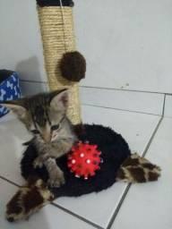Adote um gatinho - adoção responsável