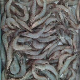 Camarão da lagoa de Saquarema