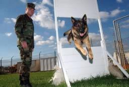 Adestramento de cães