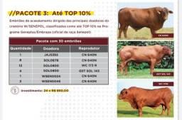 [[31]]Pacotes de Embriões Senepol PO Em 24x (Parcelas de R$ 350 a R$ 800.00) -