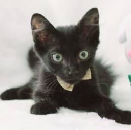 Adoção responsável 2 meses(pretinho macho,preto e branco femea)
