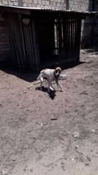 Doação dessa linda cadela